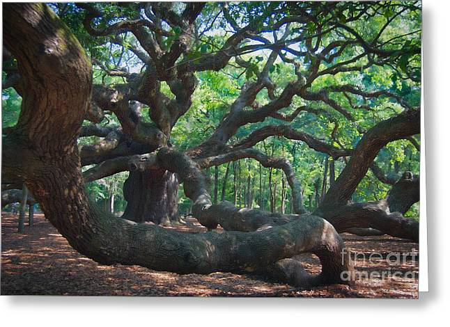 Mountain Road Greeting Cards - Angel Oak Tree Greeting Card by Skip Willits