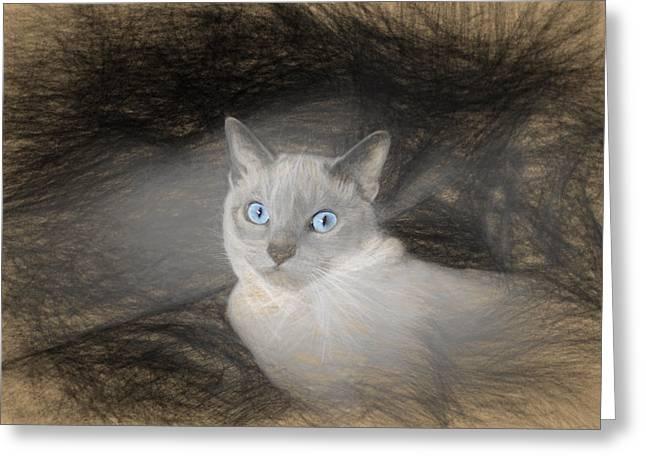 Kitten Pastel Kitten Greeting Cards - Angel Sketch with Blue Eyes Greeting Card by Linda Phelps