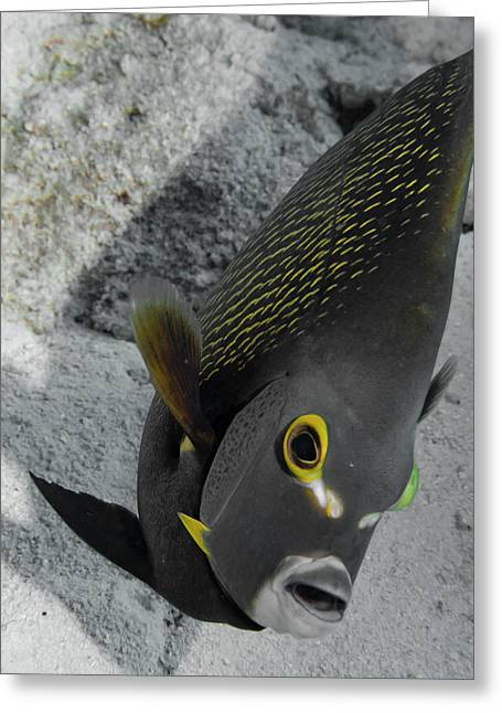 Angled Angel Fish Greeting Card by Jean Noren