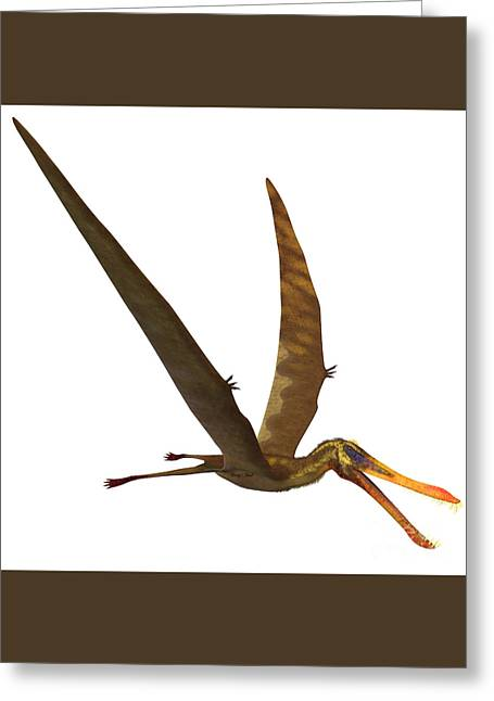 Anhanguera Pterosaur Greeting Card by Corey Ford