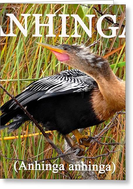 Wildlife  Poster Greeting Cards - Anhinga the swimming bird Greeting Card by David Lee Thompson