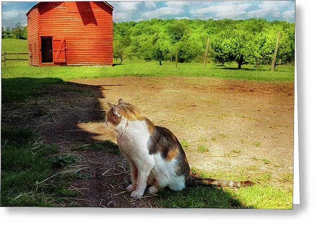 Pussy Greeting Cards - Animal - Cat - The Mouser Greeting Card by Mike Savad
