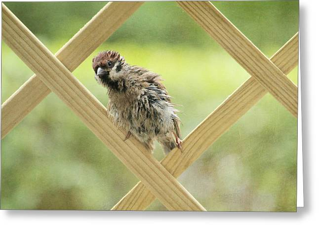 Sparrow Greeting Cards - Animal Children Greeting Card by Heike Hultsch
