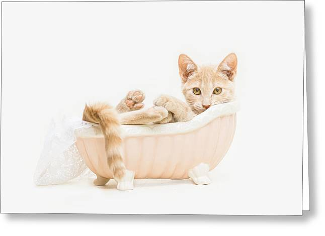 Shelter Kitty Greeting Cards - Animal Rescue Portraits- Buddy in the Bath Greeting Card by Andrea Borden