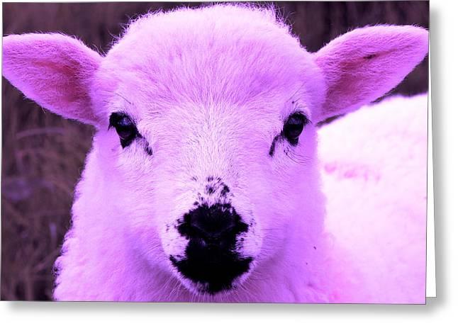 Suckle Greeting Cards - Animals Of The Rainbow Lamb Greeting Card by Aidan Moran