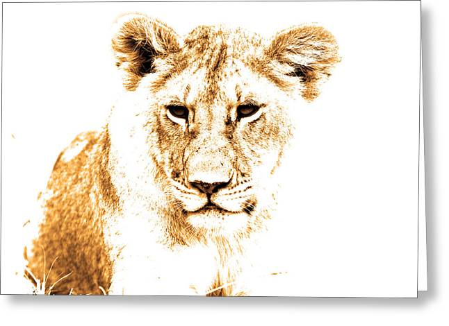 Lioness Greeting Cards - Animals Of The Rainbow Lion Greeting Card by Aidan Moran