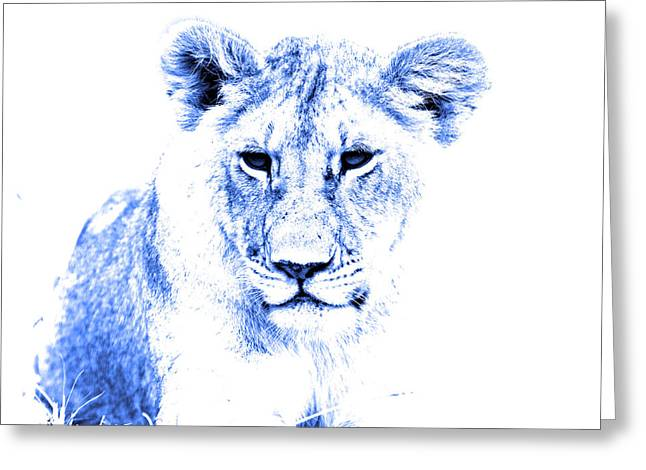 Lioness Greeting Cards - Animals Of The Rainbow Lioness Greeting Card by Aidan Moran