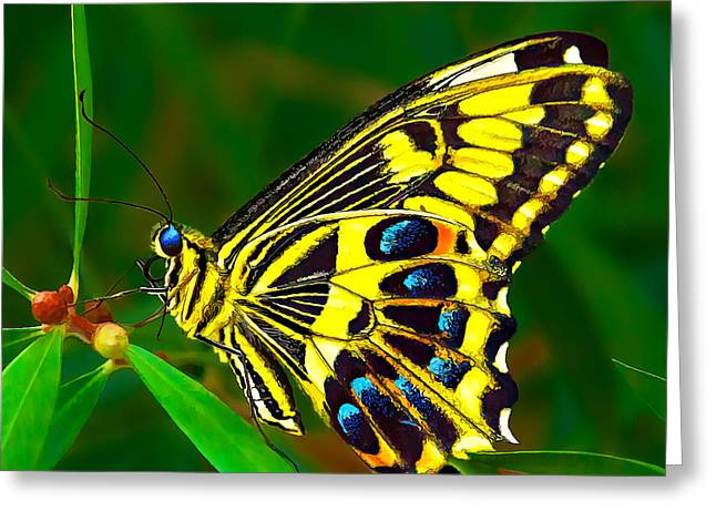 Green And Yellow Greeting Cards - Anise Swallowtail Butterfly 1 Greeting Card by Bill Caldwell -        ABeautifulSky Photography