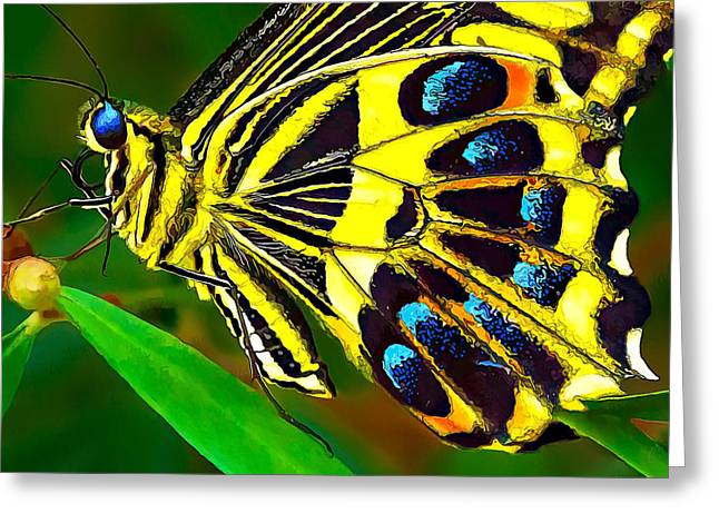 Recently Sold -  - Blue And Green Greeting Cards - Anise Swallowtail Butterfly 2 Greeting Card by Bill Caldwell -        ABeautifulSky Photography