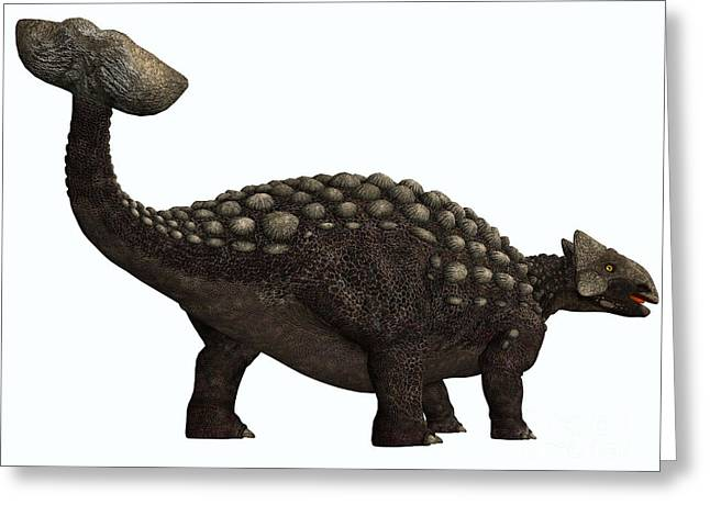 Ankylosaurus Digital Greeting Cards - Ankylosaurus on White Greeting Card by Corey Ford