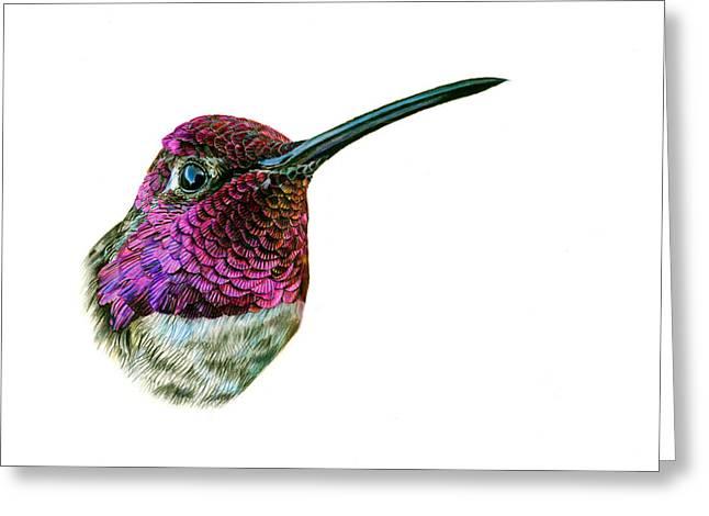 Iridescent Greeting Cards - Annas Hummingbird Greeting Card by Logan Parsons