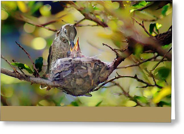 Hungry Chicks Greeting Cards - Annas Hummingbirds #2 - Nest Greeting Card by Nikolyn McDonald