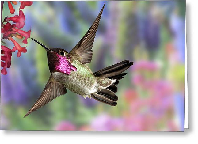 Best Sellers -  - Hovering Greeting Cards - Annas Pastel Background Greeting Card by Gregory Scott