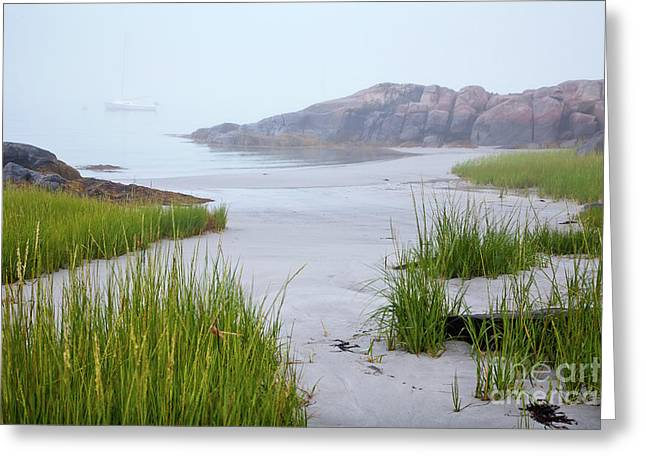 Wild And Scenic Greeting Cards - Annisquam  Fog Greeting Card by Susan Cole Kelly