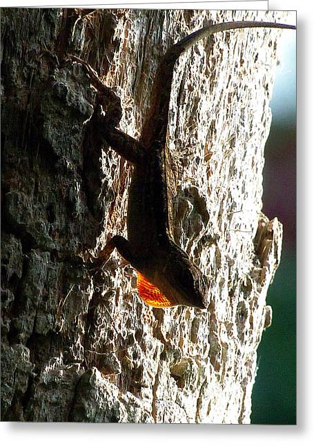 Fine Art Photograph Greeting Cards - Anole 014 Greeting Card by Chris Mercer