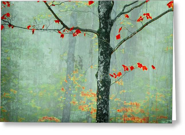 Red Leaves Greeting Cards - Another Day Another Fairytale Greeting Card by Katya Horner
