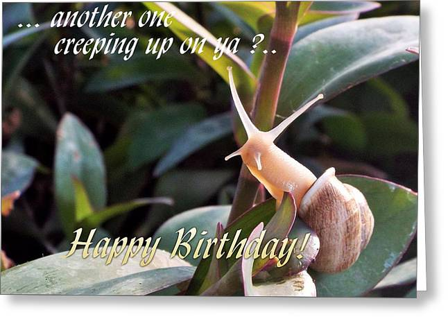 Humorous Greeting Cards Greeting Cards - Another happy birthday Greeting Card by Michael Dillon