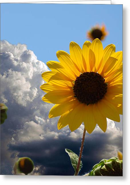 James R Granberry Greeting Cards - Answer Coming Greeting Card by James Granberry