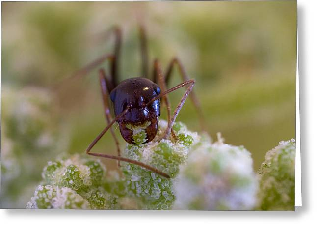 Ant Greeting Card by Andre Goncalves