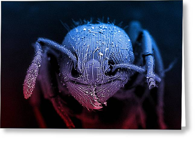 Sem Greeting Cards - Ant Head Greeting Card by Dynamic DNA Laboratories