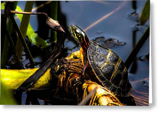 Ant Meets Turtle Greeting Card by Bob Orsillo