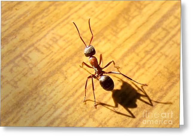 Worker Pyrography Greeting Cards - Ant Greeting Card by Vesna Cetojevic
