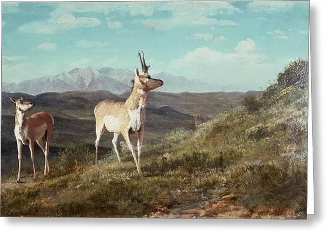 Wildlife Landscape Paintings Greeting Cards - Antelope Greeting Card by Albert Bierstadt