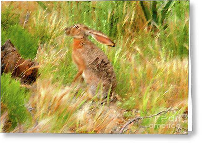Arizona Wildlife Greeting Cards - Antelope Jackrabbit Greeting Card by David Lee Thompson