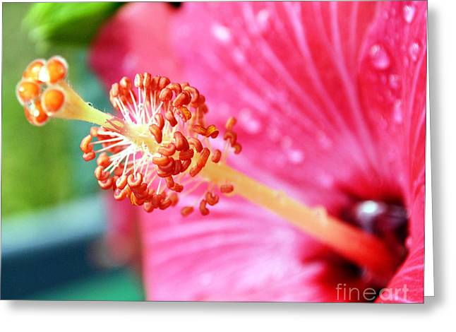 Anthers And Flaments On Hibiscus Greeting Card by Eva Thomas