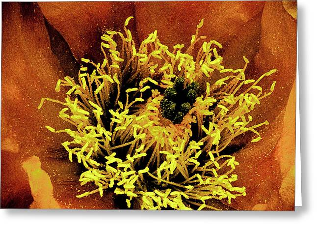 Flower Anthers Greeting Cards - Anthers Greeting Card by David Patterson