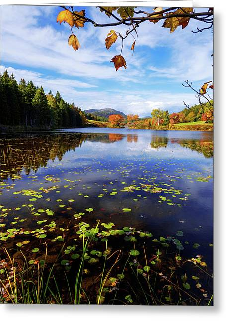 Anticipation Greeting Card by Chad Dutson