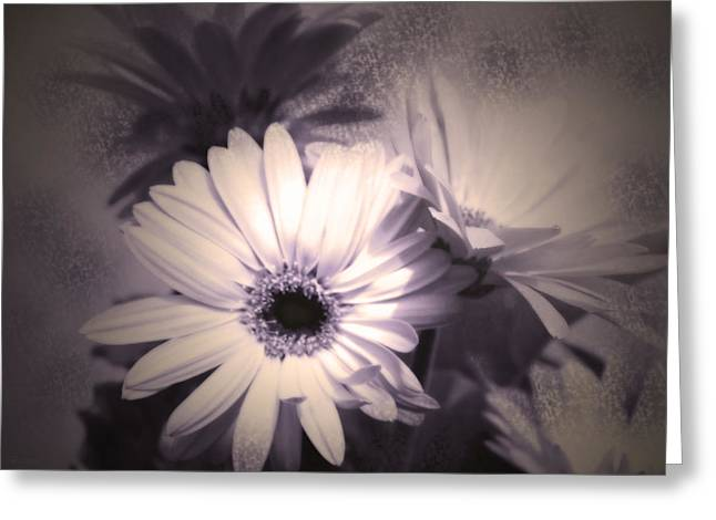 Floral Artwork Greeting Cards - Antique Delicate Daisies  Greeting Card by Cathy  Beharriell