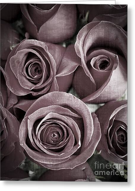 Mute Greeting Cards - Antique Roses Greeting Card by Edward Fielding