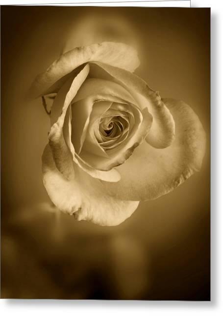Petals Framed Prints Greeting Cards - Antique Soft Rose Greeting Card by M K  Miller