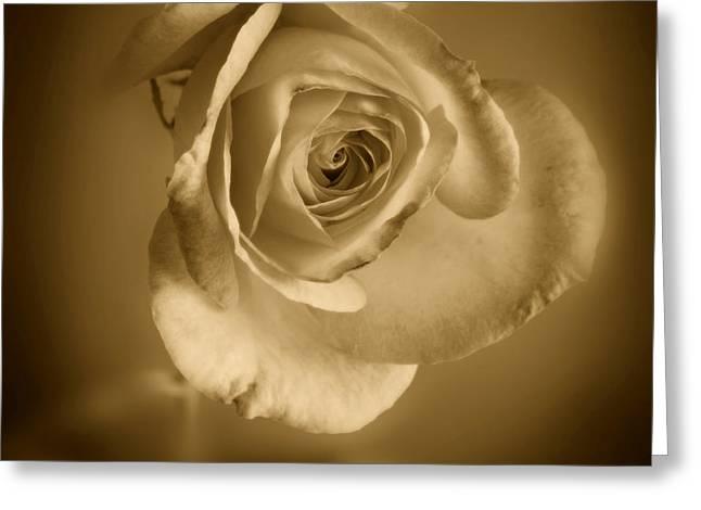 Antique Soft Rose Greeting Card by M K  Miller