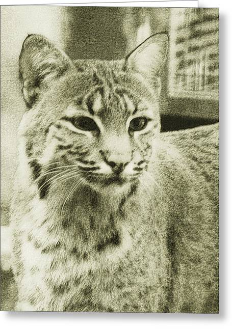 Bobcat Greeting Cards - Antique Stipple Bobcat Greeting Card by Rick Wilkerson