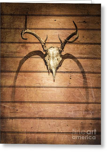 Skull Photographs Greeting Cards - Antlers Greeting Card by Diane Diederich