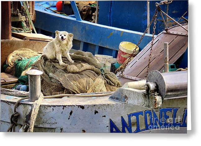 Historic Ship Greeting Cards - Antonella Watchdog.Trani Greeting Card by Jennie Breeze