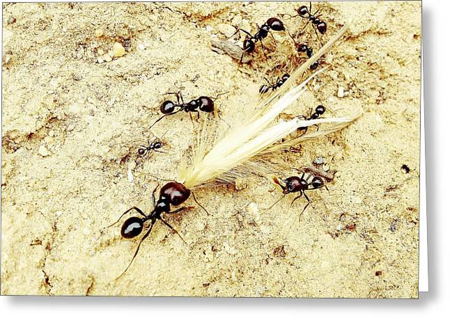 Social Organizations Greeting Cards - Ants At Work Greeting Card by Marco Oliveira