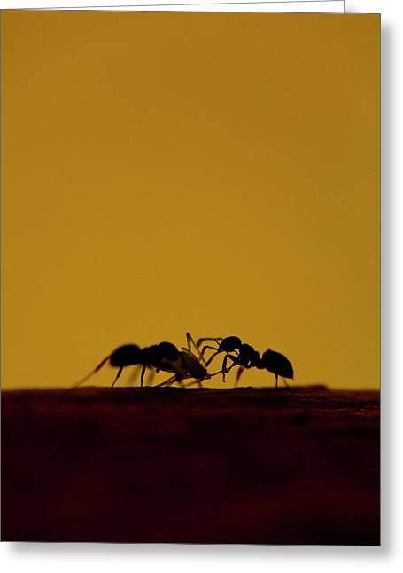 Jouko Mikkola Greeting Cards - Ants Greeting Card by Jouko Mikkola