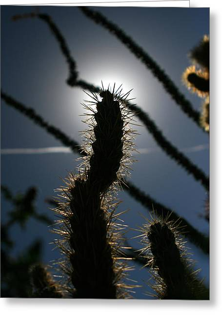 Sillouette Greeting Cards - Anza Borrego Cholla Sillouette Greeting Card by Chris Brannen