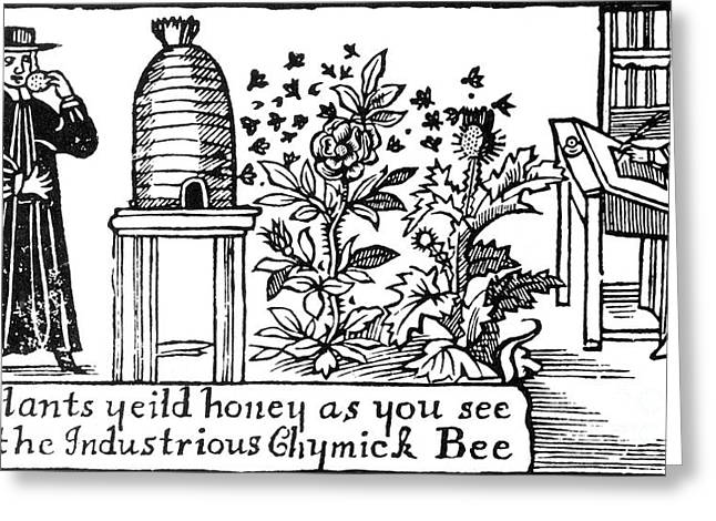 Pollinator Greeting Cards - Apiculture, Beekeeping, 18 Century Greeting Card by Science Source
