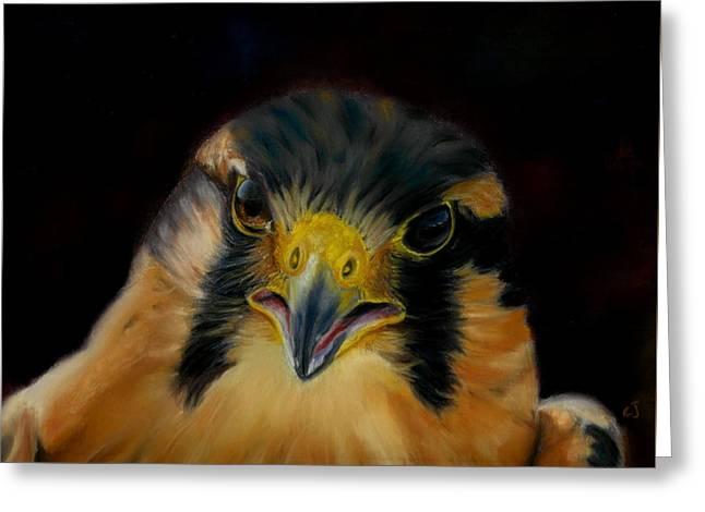 Aplomado Falcon Greeting Card by Claudia Jorio