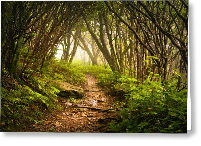 Foggy Landscapes Greeting Cards - Appalachian Hiking Trail - Blue Ridge Mountains Forest Fog Nature Landscape Greeting Card by Dave Allen