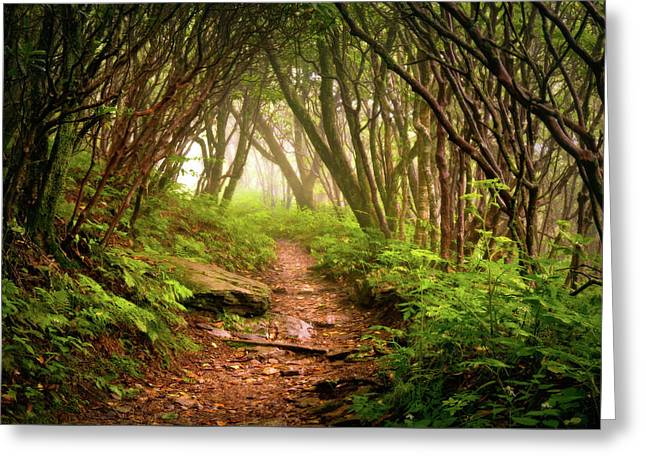 Appalachian Hiking Trail - Blue Ridge Mountains Forest Fog Nature Landscape Greeting Card by Dave Allen
