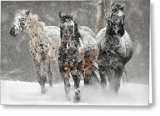 Appaloosa Winter Greeting Card by Wade Aiken