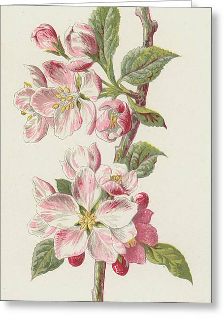 Apple Blossom Greeting Card by Frederick Edward Hulme