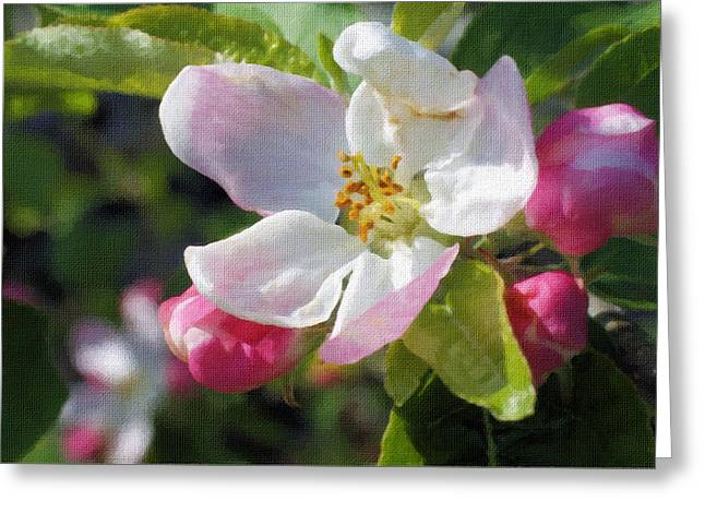 Natural Greeting Cards - Apple blossom Greeting Card by Lanjee Chee