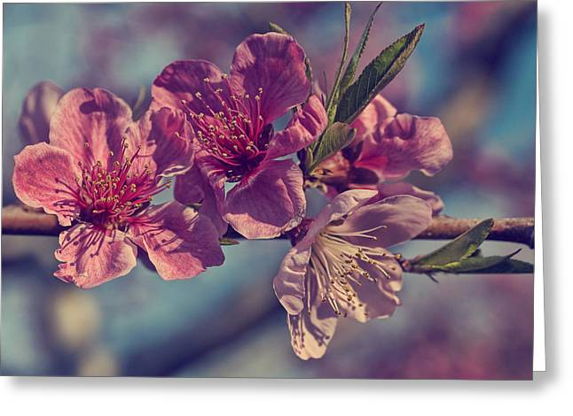 Flower Blossom Greeting Cards - Apple blossom Greeting Card by Lisa Sweet