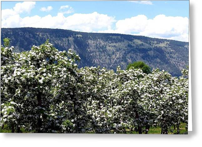 Apple Blossoms Greeting Card by Will Borden